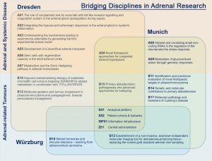 Entschuldigen Sie bitte, hier sollte eine Grafik zu sehen sein, welche die thematischen Ausrichtungen der Einzelprojekte des SFBTRR 205darstellt.