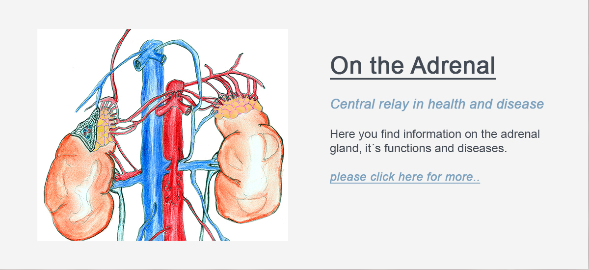 Here is supposed to be a button, which links you to the adrenal site of the CRCTRR 205.
